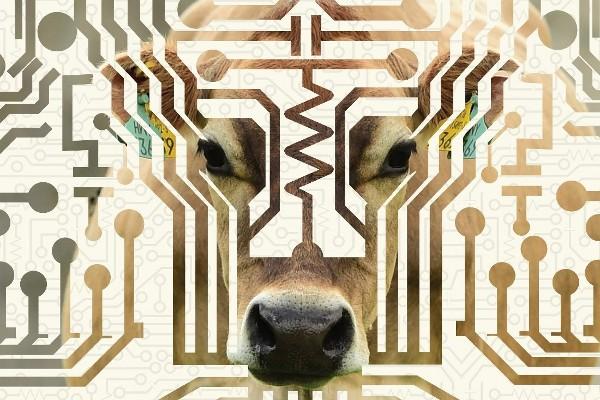 DeepTech Device Improves Survival Rates for Vulnerable Newborn Calves